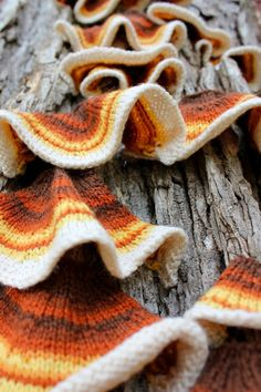 Ravelry: bromeleighad's 52 Forms of Fungi