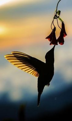 Hummingbird Wings, Hummingbird Pictures, Nature Animals, Animals And Pets, Cute Animals, Beautiful Birds, Animals Beautiful, Silhouette Photography, Animal Silhouette