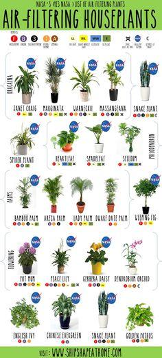 NASA's (Yes NASA) List of Air Filtering Houseplants