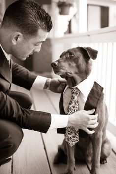 Include your four-legged friends in your wedding day celebrations. Include your furry friend in your big day by letting them into your wedding photos. You can even dress them in a formal attire for something cute! Wedding Fotos, Dog Wedding, Wedding Images, Wedding Pictures, Dream Wedding, Wedding Day, Friend Wedding, Wedding Attire, Wedding Dresses