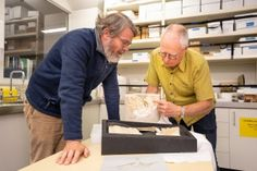 The fossilised remains of a turtle that lived between 25 and 35 million years ago have been found inside a pillar from a historic Christchurch church. Museum Collection, Fossils, Turtle, Collections, Turtles, Tortoise, Fossil