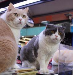 We are now on duty  #delight_pets #catworldwide ... Follow us on Instagram :D #cats #cat #catlover #lovecats #funny #fun #cute #socute #feline #felines #felinefriend #fur #furry #paw #paws #kitten #kitty #kittens #kittycat #kittylove #fluffy #fluff