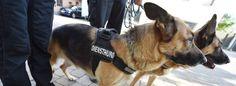 Randalierer bewerfen Polizisten und Polizeihunde mit Böllern | WAZ.de