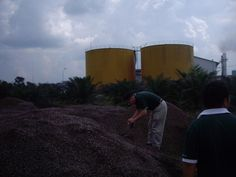Biomass Wastes from Palm Oil Mills