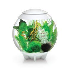 Reef One G4500-C-WHT-EU Aquarium Biorb Halo mit LED-Licht inklusive blauen Mondlicht, 30L, weiß