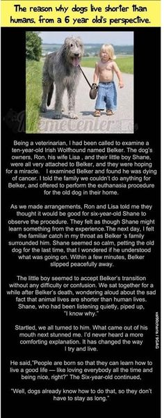 Why Dogs live shorter lives.Faith In Humanity Restored – 21 Pics Touching Stories, Sad Stories, Reading Stories, Sweet Stories, Amor Animal, Faith In Humanity Restored, Mans Best Friend, In This World, Puppy Love