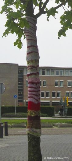 Tree near shoppingmall Woensel Xl