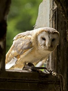 Barn Owl from our Birds of Prey Masterclass with wildlife photography expert Paul Hobson.  Image by Ian Addison.