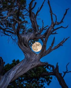 Nature-Framed Moon in Grand Canyon National Park Moon Photos, Moon Pictures, Nature Pictures, Beautiful Pictures, Luna Moon, Shoot The Moon, Moon Photography, Sun And Stars, Grand Canyon National Park