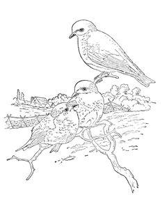 coloring page Birds - Birds