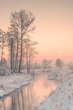 Chobbit Hobbit's Nature Corner : Photo