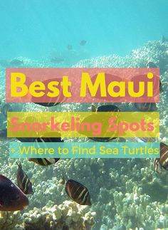 Best Maui Snorkeling Spots including Molokini, Turtle Town, and Honolua Bay.