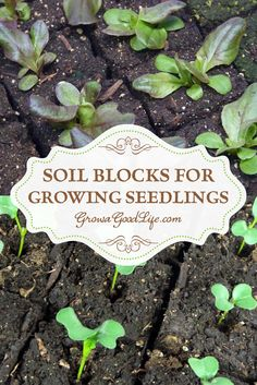 A soil block is a cube of lightly compressed soil and nutrients that will grow one transplant. I start all my seedlings in soil blocks that I make with a 2-inch Soil Blocker that produces four soil blocks at once.