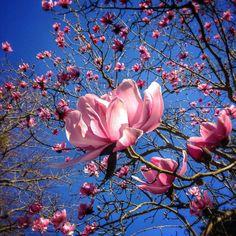 Spring, beautiful pink