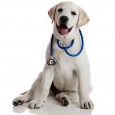 Cani-dottori