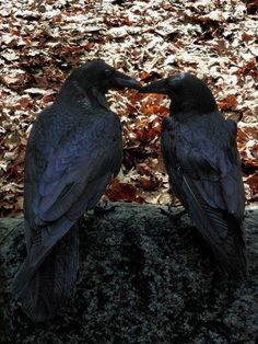 ....conversation of the crow....