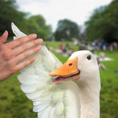 aflac duck - Google Search | Ad Characters (Vintage) | Pinterest ...