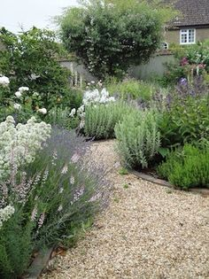 Big hearty plants to take up space. Grasses, lavender, sage, rosemary, roses