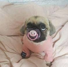 Ist durch und durch abhängig von Liebe und Zuneigung 50 Funny & Cute Dog Pictures #cutedogs