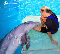 Take part in some of our hands-on Animal Care programs to learn how our team feeds, interacts with and keeps our resident animals healthy. Dolphin Tale 2, Dolphin Reef, Bottlenose Dolphin, Clearwater Marine Aquarium, Clearwater Beach, Ocean Park Hong Kong, Water Animals, Work With Animals, Future Jobs