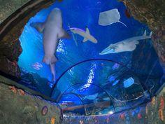 Il Viaggiatore Magazine - Sea Life Aquarium - Tunnel con squalo chitarra - Castelnuovo del Garda,Verona