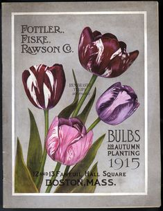 Seed annual / Fottler, Fiske, Rawson Co. :: Nursery and Seed Catalogs Posters Vintage, Images Vintage, Vintage Cards, Vintage Postcards, Garden Catalogs, Seed Catalogs, Bulb Flowers, Tulips Flowers, Vintage Seed Packets