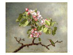 Apple Blossoms and a Hummingbird, 1875 Gicléedruk van Martin Johnson Heade bij AllPosters.nl