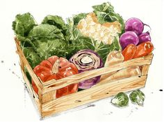 New Basket Drawing Vegetable Ideas Vegetable Illustration, Fruit Illustration, Food Illustrations, Watercolor Illustration, Fruits Drawing, Food Drawing, Logo Dulce, Basket Drawing, Vegetable Basket