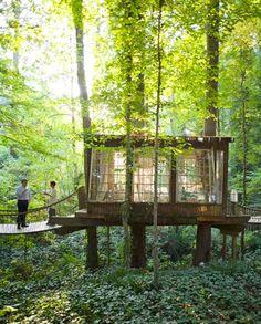 Uma pequena casa ... na floresta.