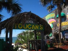Toucans in Mexico Beach Florida