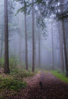 forest road  by christinewirges (Germany)