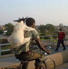Never leave home without your goat.