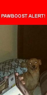 Please spread the word! Brownie was last seen in Racine, OH 45771.    Nearest Address: Near Apple Grove Dorcas Rd & E Letart Rd