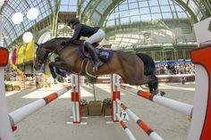 Saut Hermès 2019 - Saut Hermès Grand Prix, Show Jumping Horses, Boy Poses, Heritage Brands, Horse Stuff, Ponies, Equestrian, English, Photo And Video