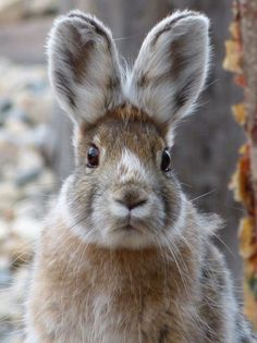 ( - p.mc.n. ) Wild bunny