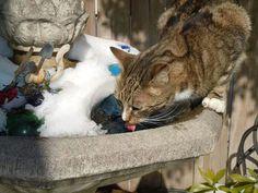 Miss you Joey the garden cat.