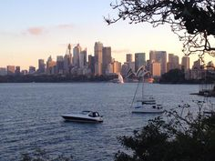The Sydney Harbor  - A Funny Thing Happened On the Way to the Market