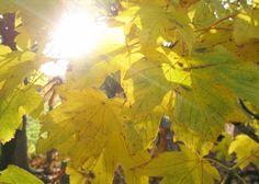 bright lights of autumn