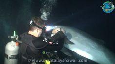 Dolphin Rescue [video]