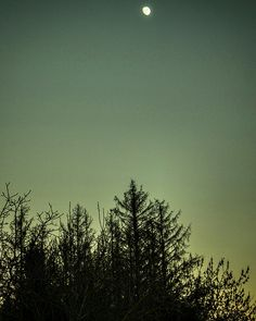 Alberi in ombra decorano un cielo verde pronto al tramonto.