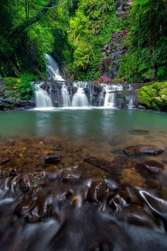 Lamington National Park - Queensland, Australia