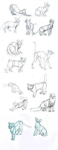 cat's body by sofmer.deviantart.com on @deviantART -- a good reference for early learnings :D