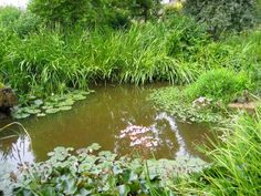 must have a natural frog pond.