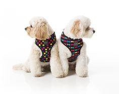 FuzzYard Cosmic and Jelly Bones Dog Harness