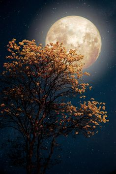 Moon - Photography, Landscape photography, Photography tips Beautiful Nature Wallpaper, Beautiful Landscapes, Moon Photography, Landscape Photography, Photography Ideas, Moonlight Photography, Ciel Nocturne, Image Nature, Good Night Moon