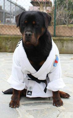 hmmm, now there's one tough rottie..beautiful