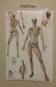 This Skeleton Is Fabulous