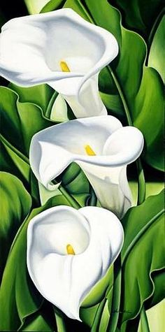 Abel, Catherine  : Lilies