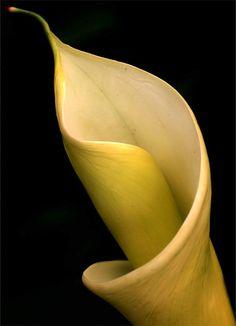 Cala 01 by TruemarkPhotography