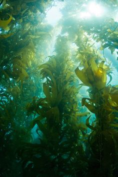 Scuba diving in a kelp forest in Catalina was a-mazing! A whole different world....